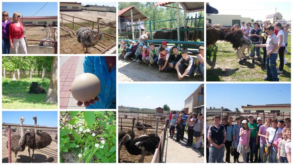 5а страусиная ферма, Приокско-терраский заповедник23 мая 2011